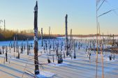 Ziemas ainavu pārgājiens Ķemeru tīrelī